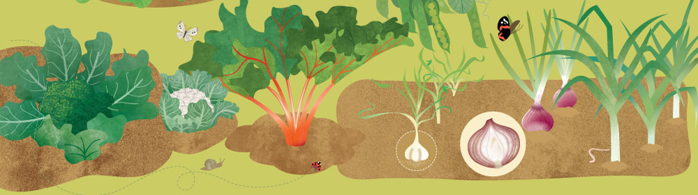 usborne Vegetables slideshow2