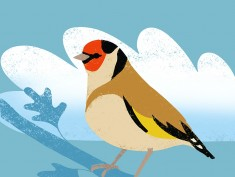 Print style - Goldfinch
