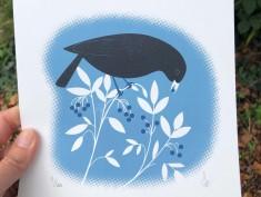 blackbird blue