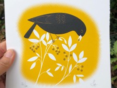blackbird yellow