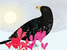 january blackbird