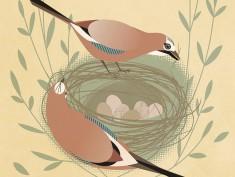 Jay Nest2
