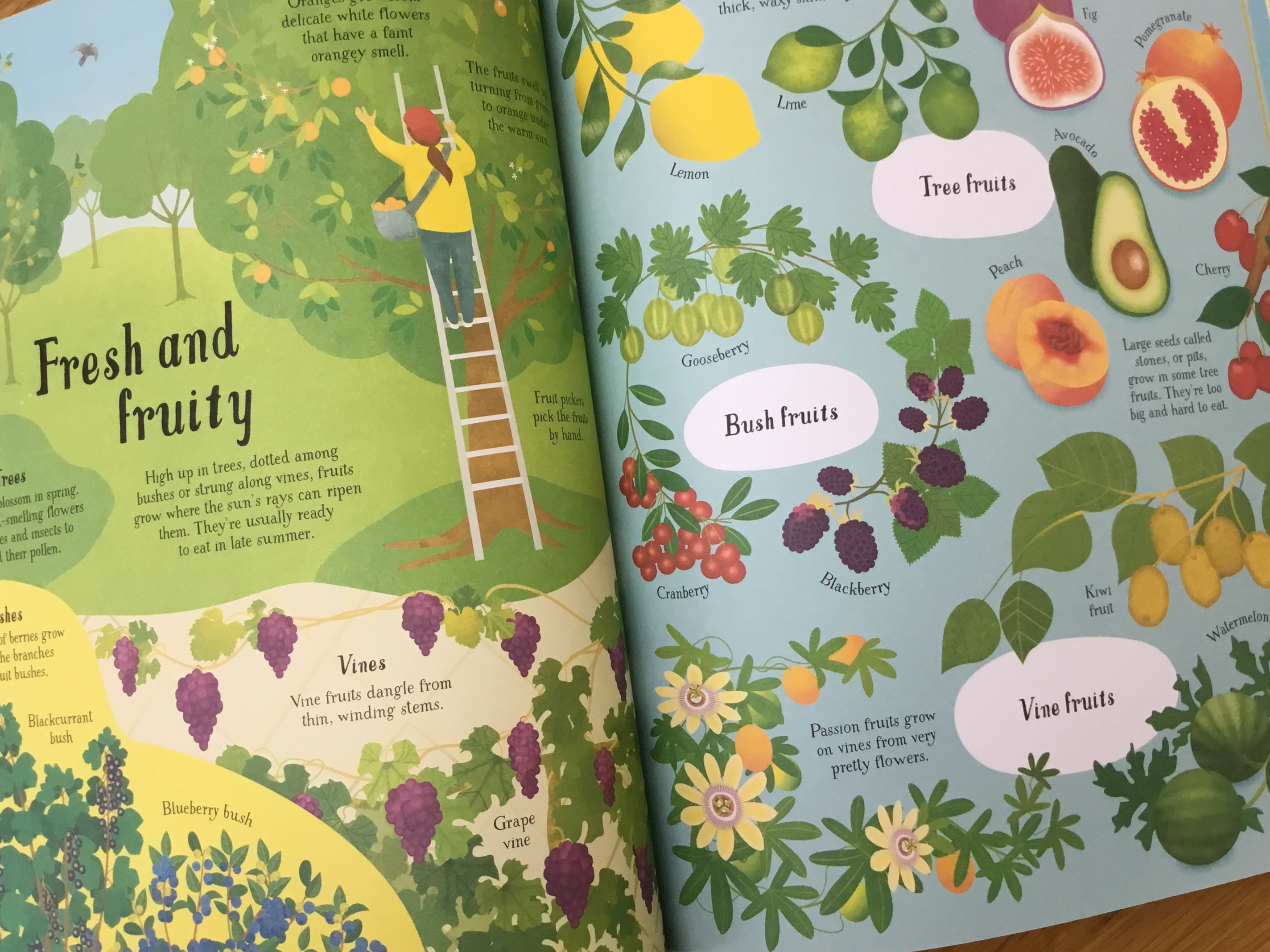 Usborne It All Starts With A Seed Sally Elford