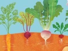 Vegetables Growing Underground